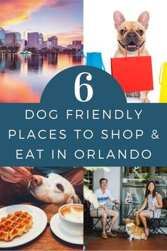 Where can you explore the city with your pup? Here are six of the most dog friendly places to eat and shop in Orlando. To go out or to stay in—that is the million dollar question. If you choose to go out, chances are you'll have to leave your pup at home; or, do you have to choose? Dog Lover Gifts, Dog Lovers, Build A Dog House, Dog Friendly Hotels, Dog List, Dog Travel, Diy Stuffed Animals, Dog Friends, Best Dogs