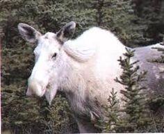 Image result for albino animals