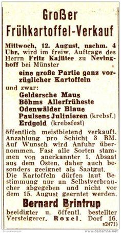 Original-Werbung/ Anzeige 1936 - FRÜHKARTOFFEL VERKAUF / NEVINGHOFF /  BERNARD…