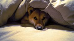 Thunderstorms: What You can do to Calm Your Dog