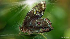 ☼ Under Whispering Trees ☼ Nature Music, Meditation Music, Relaxing Music, Whisper, Namaste, Trees, Youtube, Animals, Musik