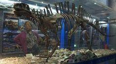 Unusual use for a Lotosaurus adentus exhibit.