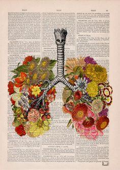 Flowery Lungs human Anatomy Print on dictionary. Anatomy art, love art, human…