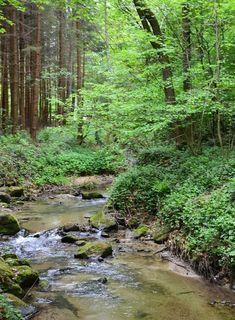 Der leise Wasserstrom, die frische Luft und die Pflanzen sind ideal für die Entspannung des Körpers und der Seele!  #derwiesenhof #wohlfühlhotelwiesenhof River, Mountains, Nature, Outdoor, Air Fresh, Hiking, Plants, Outdoors, Naturaleza
