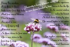 Honey Bee wanders, From flower to flower, Seeks nectar from their buds; Fluid from several blossoms, Once in tummy, Are mixed in one; Honey of sugary stuff, A sweetest viscous; - a poem by Sadashivan Nair. All poetry poets - All Poetry