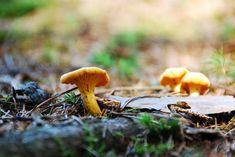 Новыйl Отравление ядовитыми грибами: симптомы, возможные причины, оказание первой помощи (Фото & Видео) +Отзывы Check more at https://krrot.net/pomosh-pri-otravlenii-gribami/