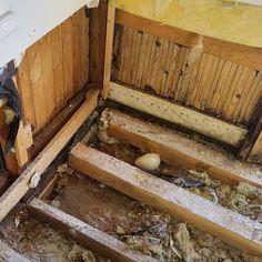 Tuli käytyä katselmoimassa vaihteeksi hieman ryönäisempää projektia. Vinkkinä kaikille jotka suunnittelevat vanhan puurakennuksen alapohjan täyttämistä betonilla: 1) Se on huono idea. 2) Älä nyt ainakaan päällystä sitä laattaa kattohuovalla jonka päälle tulevat suoraan eristeet. #tulikivanlämmin #jokinhaisee #mineraalivillaviljelmä #rakennusrestaurointi #restauroinnintarpeessa #homesweethome #home