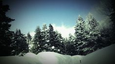 Landscapes nature winter forest (2560x1440, nature, winter, forest)  via www.allwallpaper.in