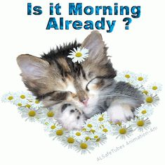 Is it morning already? coffee greetings good morning good morning greeting good morning quote good morning poem good morning blessings good morning friends and family good morning coffee Good Morning Poems, Morning Cat, Good Morning Coffee, Morning Blessings, Good Morning Friends, Good Morning Greetings, Morning Quotes, Good Morning Beautiful Pictures, Morning Pictures
