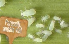 Parassiti delle piante: 6 rimedi naturali per combatterli | Giardinieri in affitto