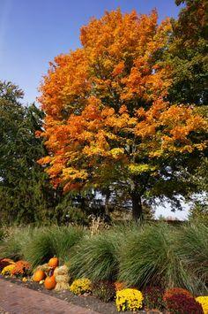 Seasons Changing <3 Dow gardens, Midland, MI