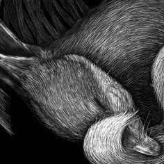 scratchboard illustration Animal Drawings, Drawing Animals, Scratch Art, Art Design, Design Ideas, Illustration Techniques, Art Techniques, Amazing Art, Art Projects
