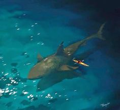 1000 images about fish and fishing on pinterest for Sharks fish and chicken little rock