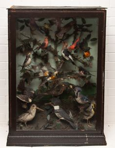 Cabinet of ornithological curiosities