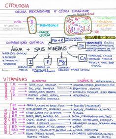 // ♦ CORREÇÃO: No resumo de Eritroblastose fetal, o título está incorreto. Com um S a mais:/ Happy Ending Massage, Study Biology, Mental Map, Study Techniques, School Notes, Study Inspiration, Studyblr, Study Notes, Student Life