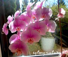 Flora, Garden, Plants, Balcony, Garten, Lawn And Garden, Gardens, Plant, Gardening