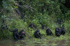 Sanctuary Lola Ya Bonobo Kinshasa