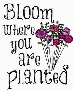 bloomwhereyouareplantedcolor