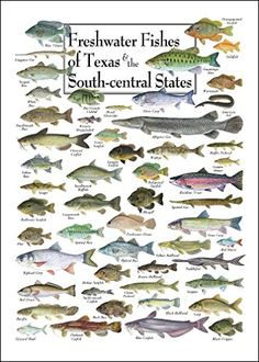 Freshwater Fishes Of Texas South Central States Poster
