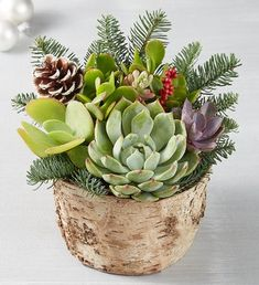 Rustic, woodsy, and right on trend for the holidays. Our planted garden of assorted succulents is designed inside a rustic white birch planter and finished with seasonal accents. Full of festive texture and color, it makes a perfect centerpiece for the holiday table. Assorted succulent garden features evergreen sprigs, natural dried berries, and white-tipped pinecones Succulent assortment may vary based on availability Faux Seasonal accents Designed in a rustic, white birch container… Succulent Gifts, Succulent Centerpieces, Succulent Gardening, Succulent Arrangements, Succulents Garden, Succulent Bowls, Flowering Succulents, Succulent Wreath, Gardening Tips