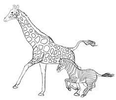 draw giraffe zebra animals drawing sketch zebras giraffes drawings animal easy step head sketches tutsplus steps beginners africa paintings drawingskill