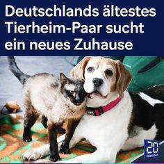 """20 Minuten auf Instagram: """"Beagle Marley (15) und Siamkatze Luzie (19) leben seit dem Tod ihres Besitzers Anfang März im Berliner Tierheim. Jetzt sucht man ein neues…"""" All Dogs, Beagle, Animals, Instagram, Siamese Kittens, Animal Shelter, Addiction, New Homes, Death"""
