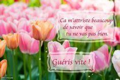 Bon Courage, Peppermint, Congratulations, Encouragement, Messages, Sentiments, France, Stickers, Facebook
