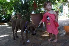 20 December 2014 - Zsa Zsa meets my Grand daughter for the first time. From Rags To Riches, Zsa Zsa, Pitbulls, December 2014, Drinking Water, Pets, Pepper, Daughter, Facebook