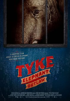 A Must-See Film: 'Tyke Elephant Outlaw' Two decades after an elephant named Tyke was gunned down in Hawaii, a new documentary shows how far we've come and where we're going regarding captive elephants. Learn more about how you can help and find out when you can see the film.