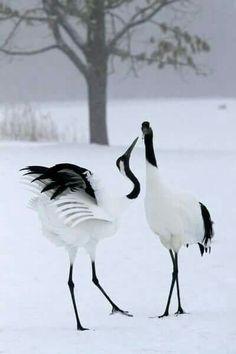 Japanese crane.