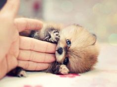 tickle the fluffy puppy
