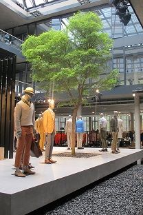 Bucida tree buying and planting in fashion store - Greening interior europe wide !