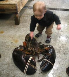 A child inspects Rocky, a 40-inch-long, 27-pound lobster that was landed off the coast of Maine by shrimp fisherman Robert Malone. The giant crustacean was given a temporary home at Maine State Aquarium in West Boothbay Harbor before being released back into the Atlantic Ocean