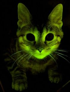glow in the dark kitteh