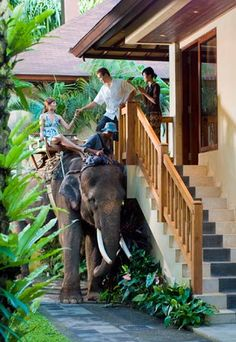 The Elephant Safari Park Hotel Lodge is a 26-room hotel on 8.5 acres that acts as a sanctuary for the largest herd of rescued Sumatran elephants in the world. Not only do you get escorted to your room ON an elephant, the rooms feature artwork painted BY e