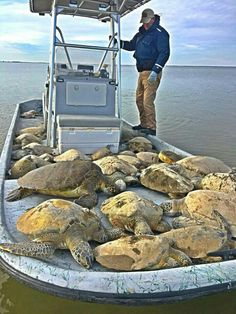 Texas Game Wardens successfully saved 151 green sea turtles that were stunned due to recent cold weather ❤