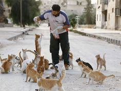 Syrian ambulance driver cares for cats abandoned by owners fleeing shelling in Aleppo