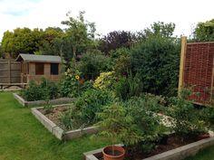 Veg patch & summerhouse July 2016