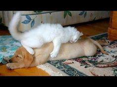 Animales que molestan a otros animales... ¡Son pesadísimos!