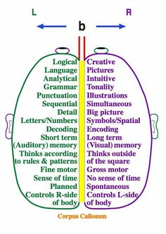 Images Right brain / Left brain Find activities to exercise and stimulate each side of the brain.Right brain / Left brain Find activities to exercise and stimulate each side of the brain. Occupational Therapy, Speech Therapy, Aphasia Therapy, Picture Letters, Anatomy And Physiology, Brain Anatomy, Speech And Language, Special Education, Physical Education