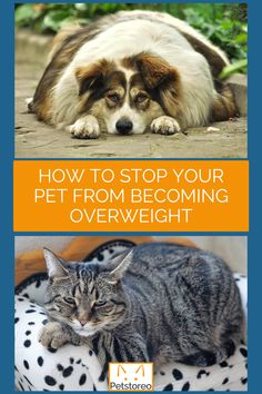 😱Pet obesity is on the rise. Remember obesity is preventable! Read more about our concerns and advice in our latest blog ✅Follow our top tips to avoid your pet becoming overweight. It's never too early or too late to start. ⚖️🐾Weigh your pet once a month and record their weight in Kgs. You can easily keep track of any weight gain or loss. Remember to weigh out daily ration, our slow feed bowls help too! Make exercise fun with games and adapt to your pets life stage or condition. Pet Life, Pet Health, Weight Management, Weight Gain, Fun Workouts, Happy Life, Your Pet, Bowls, This Is Us
