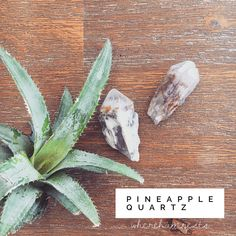 These babes featured in my post on Monday and I had loads of questions about what they are and what I use them for.🤩//These babes are actually new to my collection, they caught my eye in a dark-out of the way corner of a shop I was in over the weekend.//Pineapple Quartz, or Lithium Pineapple Quartz, predominantly comes from Madagascar 🇲🇬 has a gentle, but powerful vibration that primarily resonates with the Heart Space💚💗.//Use this beautiful healer;- to tap into Creative Intelligence… Healer, Weekend Is Over, Cactus Plants, Crystal Healing, My Eyes, Pineapple, This Or That Questions, Crystals, Madagascar
