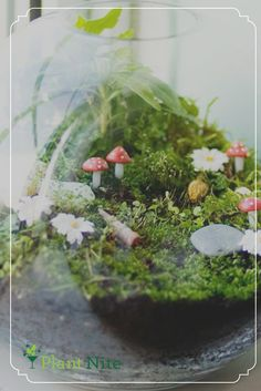 Beautiful Terrarium Ideas What Is A Terrarium? A terrarium is essentially an enclosed environment for growing plants. Mini Terrarium, Miniature Terrarium, Terrarium Cactus, Fairy Terrarium, How To Make Terrariums, Miniature Fairy Gardens, Ideas Florero, Suculentas Diy, Paludarium
