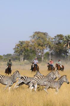 Randonnées et safaris à cheval au Botswana dans l'Okavango