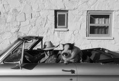 Thelma and Piguise Photo by Cerrina Smith — National Geographic Your Shot World Laughter Day, Shot Photo, National Geographic Photos, Your Shot, Laugh Out Loud, Amazing Photography, Cool Photos, Shots, Challenges