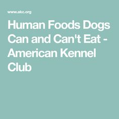 Human Foods Dogs Can and Can't Eat - American Kennel Club