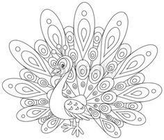 Vector: Peacock