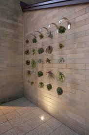 Superb Plant Hangers convention Other Metro Contemporary Landscape Remodeling ideas with Air Plant Chandelier Airplants green wall hanging airplants Landscape Architecture plant hanger Hanging Air Plants, Indoor Plants, Plant Wall, Plant Decor, Air Plants Care, Air Plant Display, Decoration Plante, Plant Guide, Contemporary Landscape
