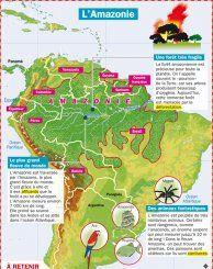 L'Amazonie - Mon Quotidien, le seul site d'information quotidienne pour les 10-14 ans !