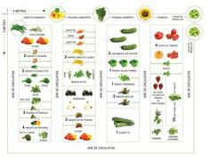 The way to place your greens in your backyard - Indoor Gardening Plan Potager, Potager Bio, Potager Garden, Garden Landscaping, Diy Garden Projects, Diy Garden Decor, Garden Decorations, Covered Garden, Home Vegetable Garden
